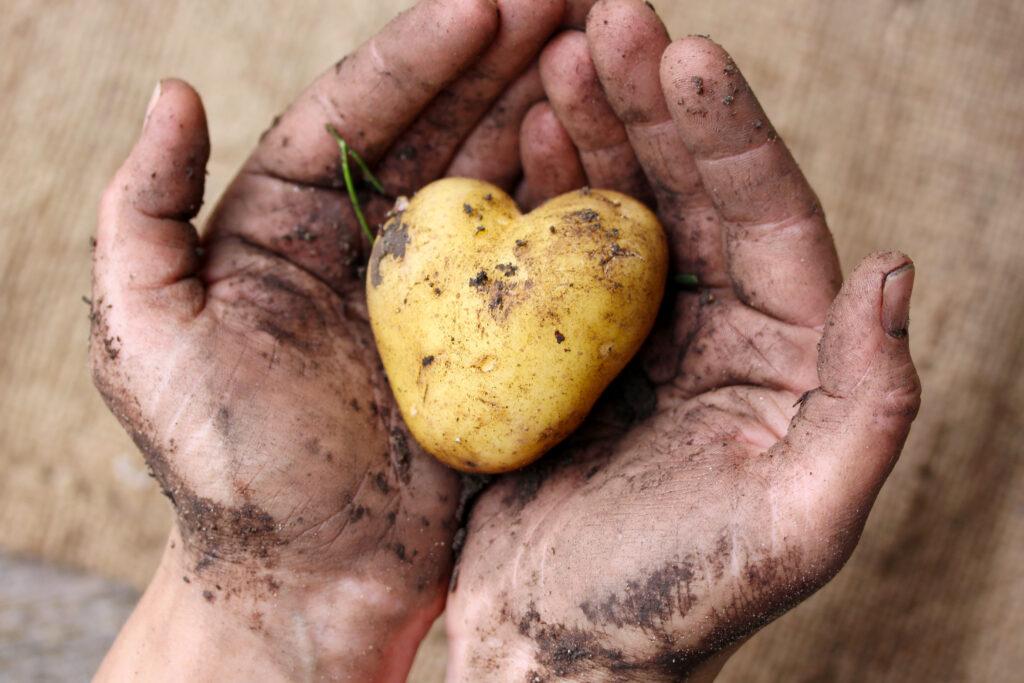 Single Landwirt sucht Liebe